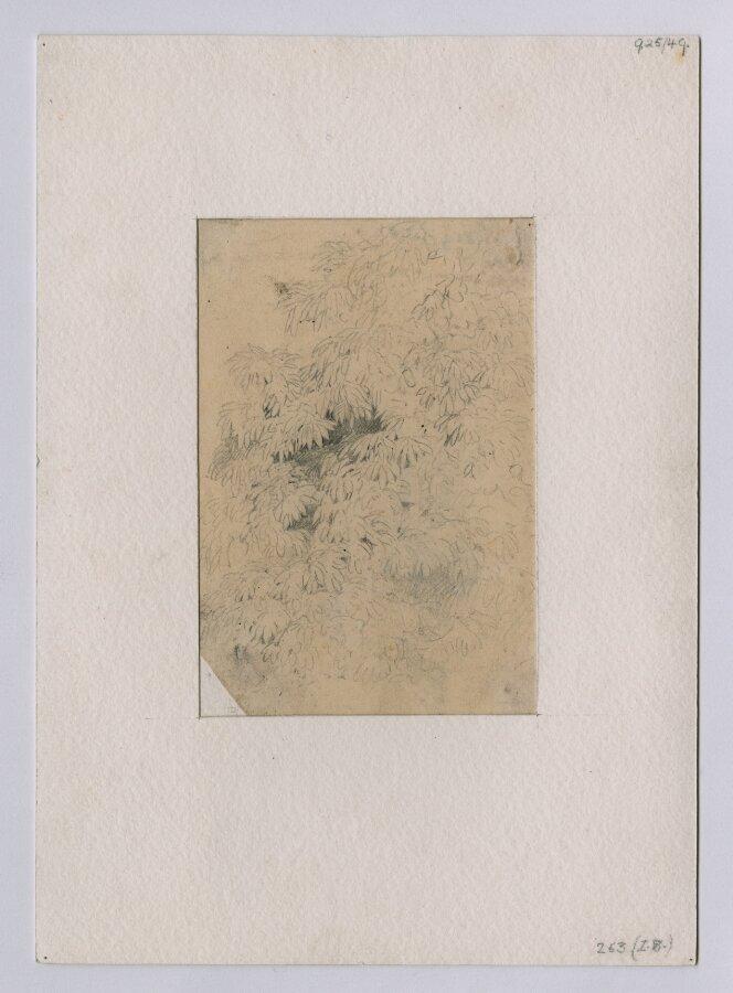 Recto: Study of Foliage, perhaps rhododendron; Verso: Slight study of foliage;